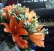 recent/pianolilies.jpg